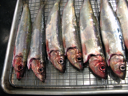 fresh sardines ready to broil or grill