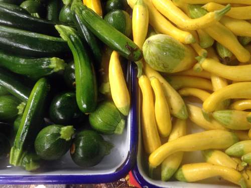 summer squash at the farmers market